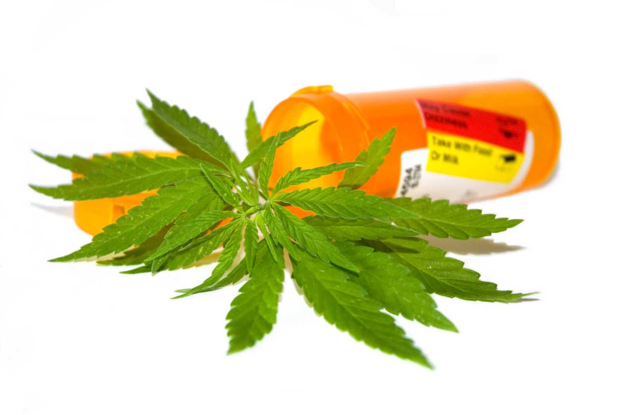 Cuál dosis de aceite medicinal de cannabis se debe tomar