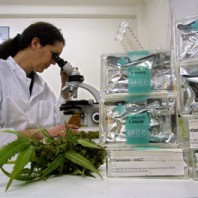 Laboratario cannabis